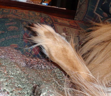 My DaGrinchy Toes 2010